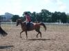 konie_43
