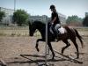 konie_51